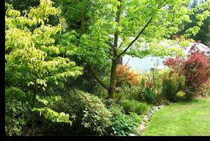 shade-loving shrubs for the garden