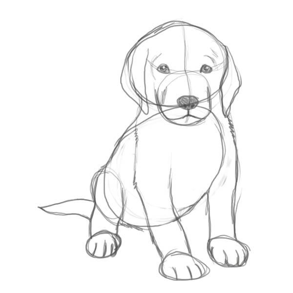 отличных картинки собак рисовать легко всегда