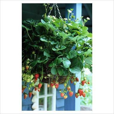 gardeners advice lunar calendar