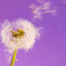 кашель при аллергии препараты