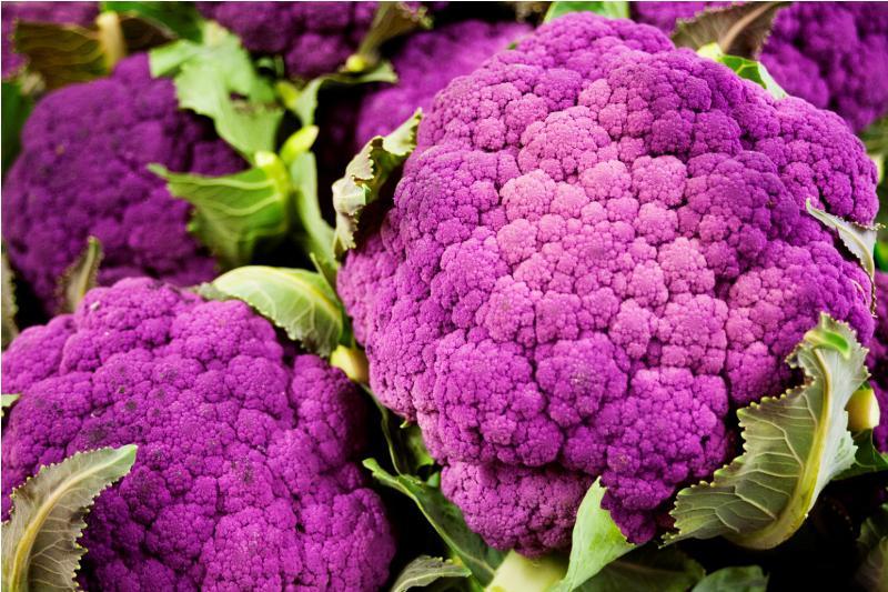 приготовить цветную капусту фиолетового цвета молодой сплавщик Осташа
