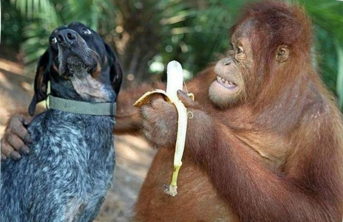 особая группа фото и картинки обезьяны на собаках изображение открыть