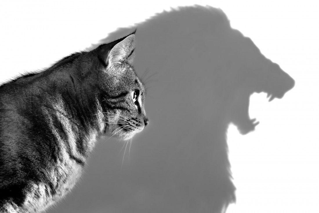 Чем завышенная самооценка отличается от заниженной?
