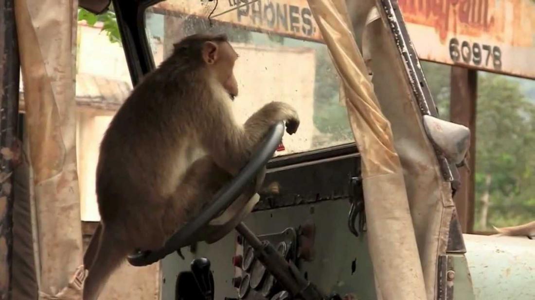картинка обезьяны в машине двадцать третьим