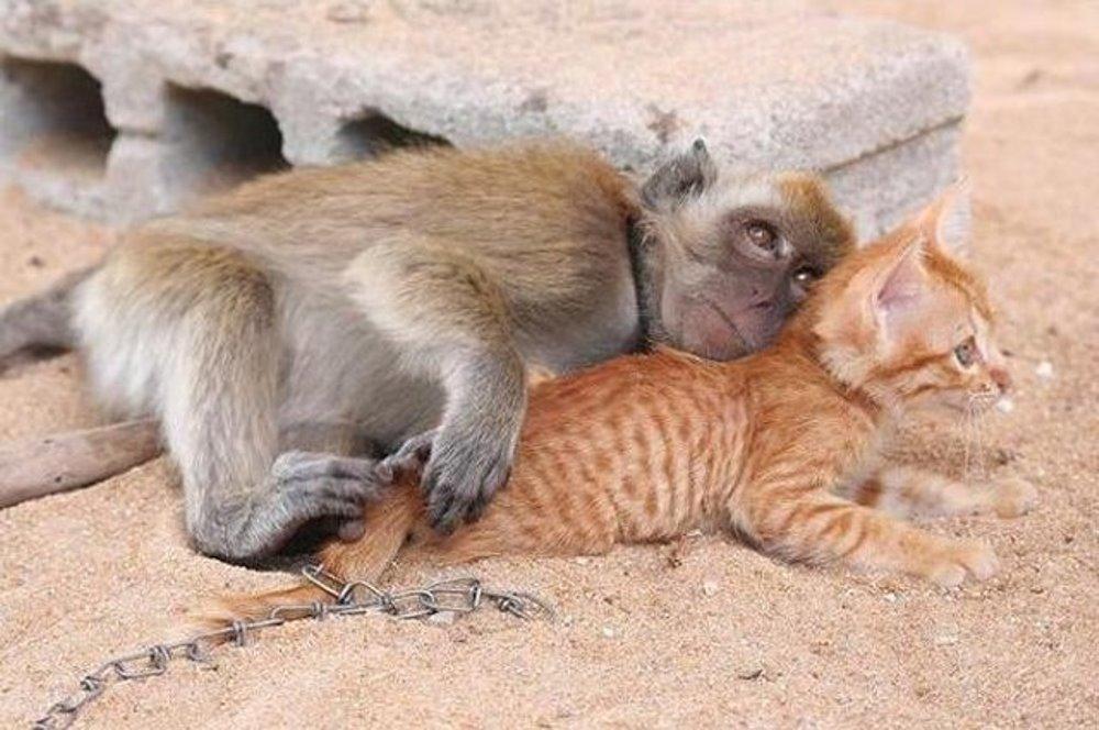Котенок с обезьянкой картинки, открытки