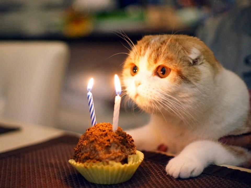 Мой, у меня сегодня день рождения картинки с котами