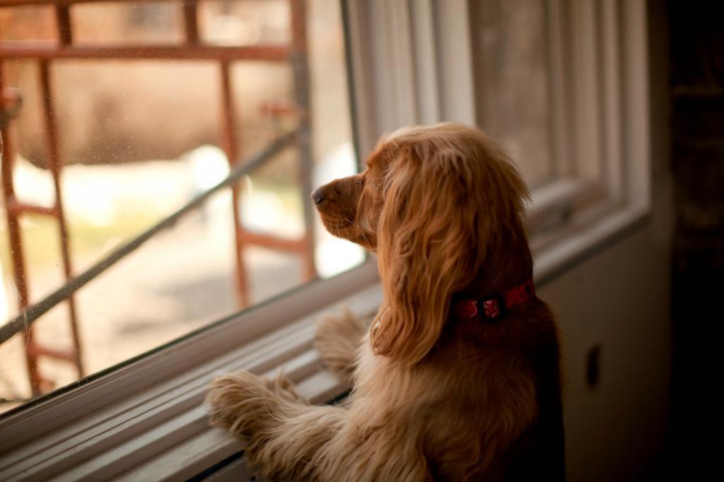 будут картинки ждущих собак работающие дровах