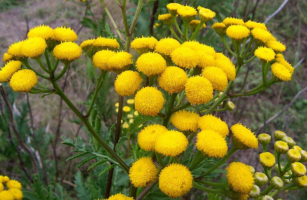дикие растения фото и названия дает