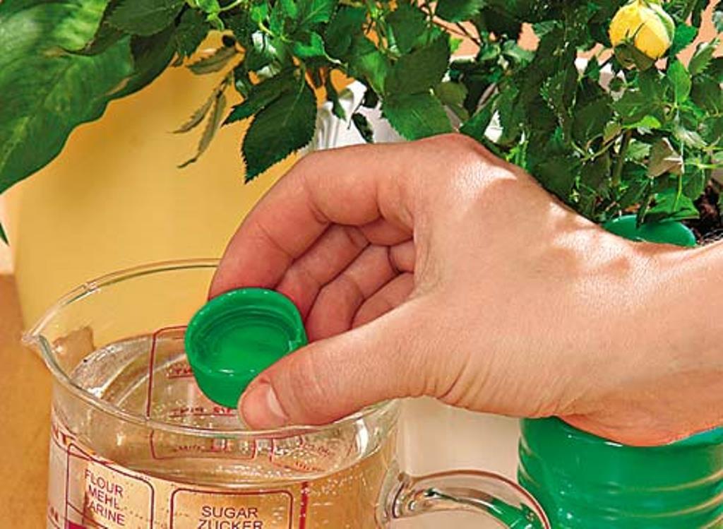 Делаем медовый раствор для подкормки огурцов