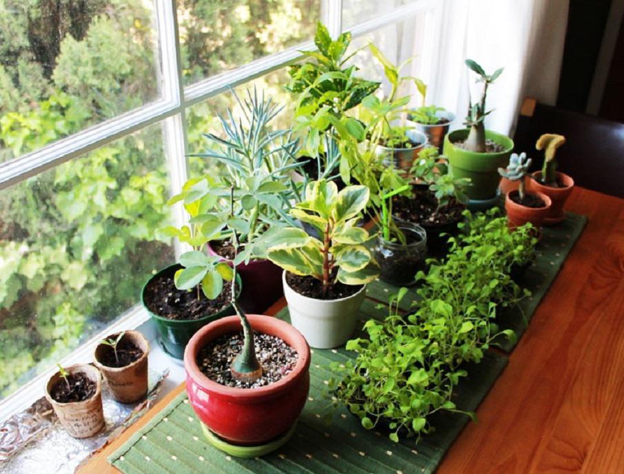 Полезные растения выращивание дома 94