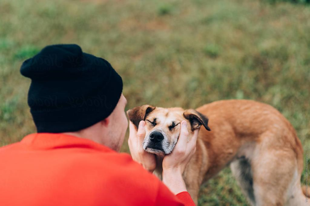 Картинка гладить собаку