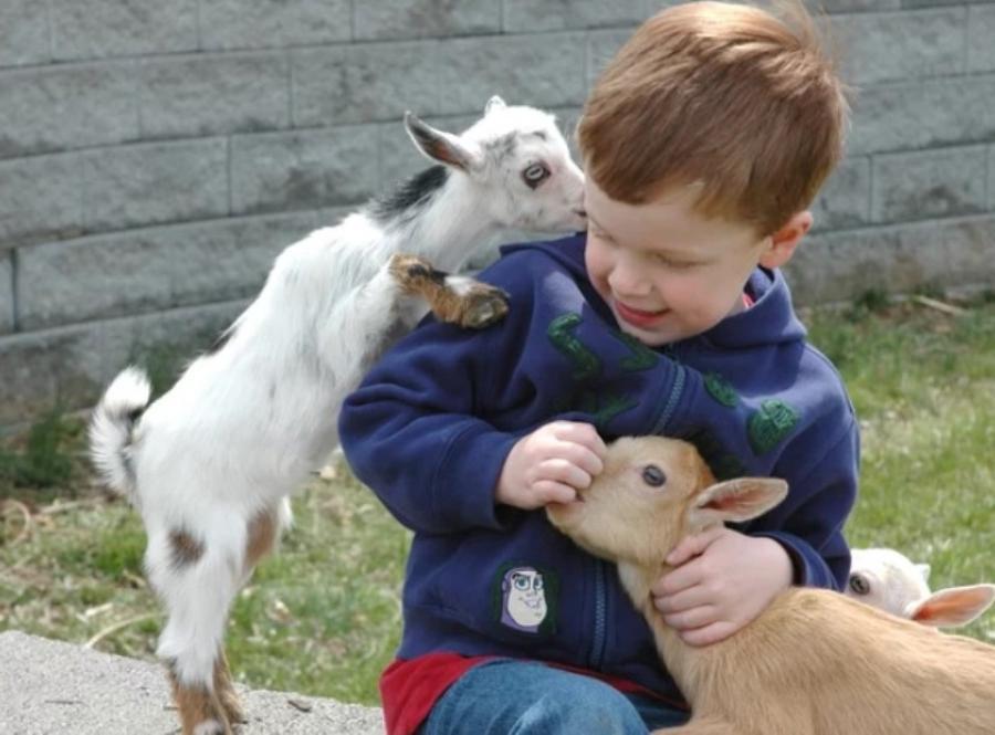 можно ли в квартире держать козу