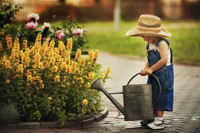 в какое время лучше поливать растения