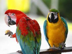 К чему снится попугай: предсказания на любой вкус