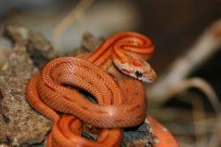 Соник снилось змея