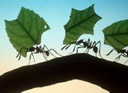 Борьба с вредителями: как избавиться от муравьев в доме