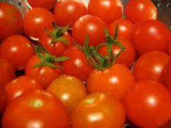 Томат «Анюта» - некоторые хитрости и агротехнические приёмы выращивания
