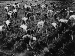 Коллективизация сельского хозяйства: на пути к «коммунистическому раю»