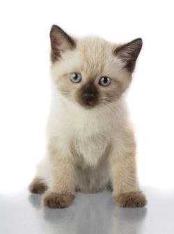 Как назвать котенка: выбираем кличку питомцу