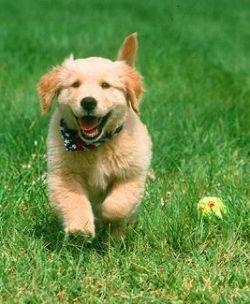 Как назвать своего питомца: клички собак и их значение