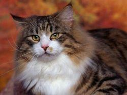 Сколько живут коты или как узнать кошачий возраст