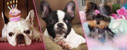 Какую выбрать породу собаки для квартиры
