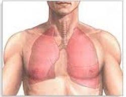 Какие симптомы воспаления легких у взрослого