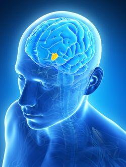 Гипоталамический синдром: причины, симптомы и методы лечения