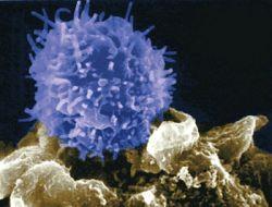 Лимфоциты понижены или повышены. Причины и лечение