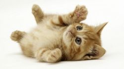 Имена для котят-девочек и для котят-мальчиков