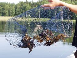 запрещенная приманка для рыбы fishhungry отзывы
