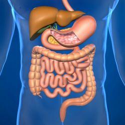 Как проверить тонкий кишечник без колоноскопии