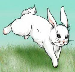 Как нарисовать зайца карандашами или акварелью