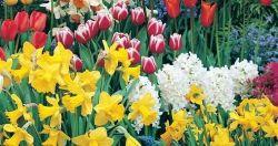 Виды цветов и их особенности при выращивании на садовом участке