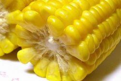 Кукуруза: полезные свойства и применение