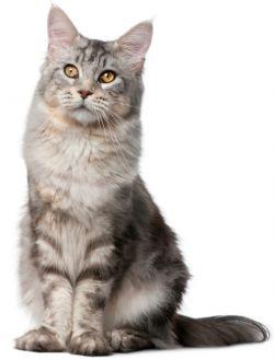 Выбираем имена для кошек-девочек
