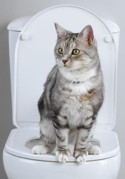 Выкройки котов : лучшие изображения (250) Выкройки, Пошив игрушек и Мягкие