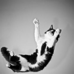 Болезнь кошачьих царапин: симптомы и лечние