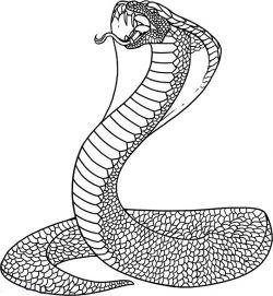 Как нарисовать змею: шаг за шагом