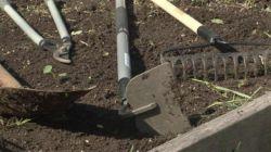 Полезные советы: как избавиться от сорняков на участке