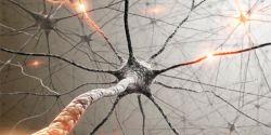 Вегетативная нервная система: ее отделы и функции