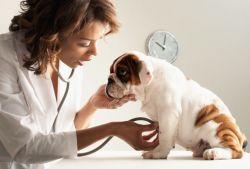 Вазелиновое масло: инструкция, применение для собак. Как давать вазелиновое масло кошке?