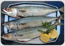 Как посолить вкусно скумбрию: советы и рецепты
