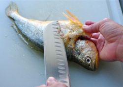 Как чистить рыбу правильно? Разумные советы