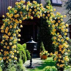 Как Размножить Розы Из Букета Пошаговая Инструкция