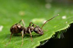 Как избавиться от муравьев в огороде? Средства от муравьев: отзывы