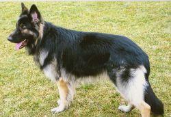 Как ухаживать за собакой? Собаки: содержание и уход