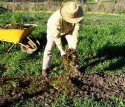 Какие удобрения вносить осенью. Комплексные, минеральные и калийные удобрения для почвы