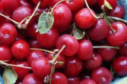 Наливка из вишни. Рецепты вишневых наливок