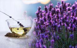 Лавандовое масло: свойства, применение, отзывы. Лавандовое масло для волос